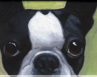 Boston Terrier cute magnet