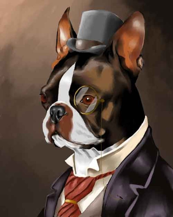 american gentleman boston terrier Also known as the american gentleman, the boston terrier is a gentle family companion with distinctive tuxedo-like patterns in his fur they are one of the most popular canines in homes across the country even though they were initially bred to be fierce fighting dogs the boston terrier is an exceptional companion dog.