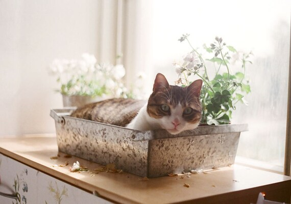 HALF PRICE SALE - The prettiest flower - 5x7 fine art photographic print of a cute cat in an indoor garden