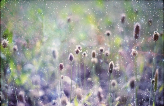bokeh photo of magical garden woodland scene of flowers