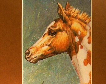 Paint Foal horses giclee print in 8x10 mat equine art by Kerry Nelson