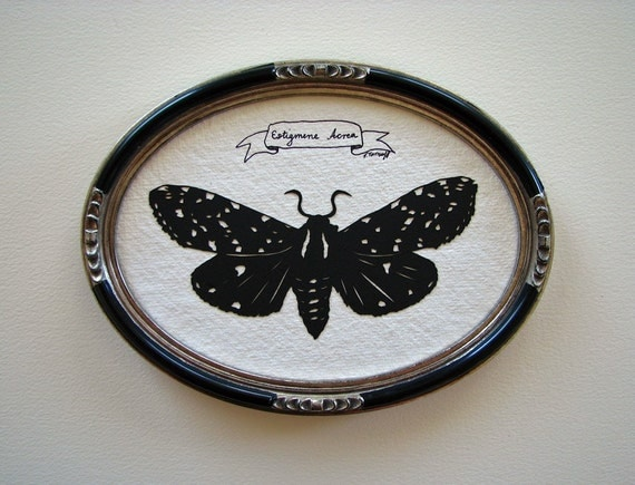 Insect Specimen No.2 - Original Papercut Art, Framed