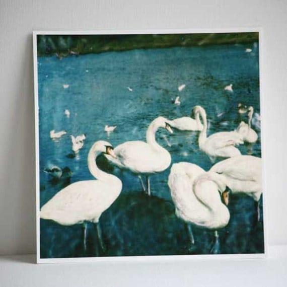 Swans - The Queen's Swans - Edinburgh - Polaroid Painting - Polaroid Print