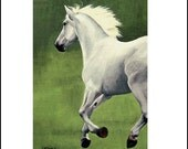 Run Baby, Run  - White Stallion ACEO Print