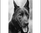 German Shepherd - ACEO Print