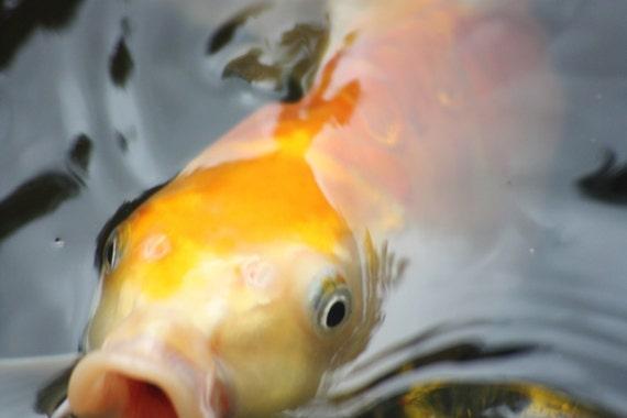 Fish Eye See You