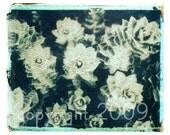 Polaroid transfer - Green Prickly Plant
