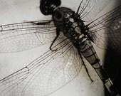 Dragonfly - 8x10 fine art photographic print