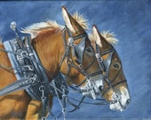 Mule Team, mule pair in harness, giclee print