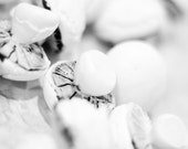 decorative and edible mushrooms
