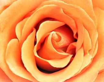 Peach Rose Note Card
