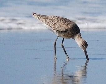 Shore Bird Note Card
