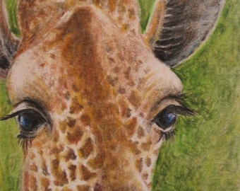 ACEO Giclee Print Buddy the Giraffe by Rebecca Salcedo A4C