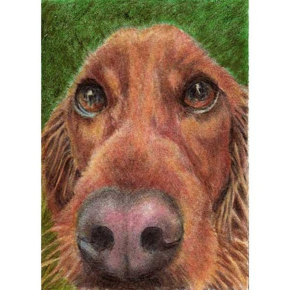 ACEO Print Irish Setter by RSalcedo A4C Art For Critters Red Green Retriever