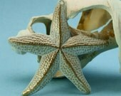 Starfish Charm - White Hand Patina - Nautical Charms - Shell Charms - Beach Charms - Patina Queen - 1 Large
