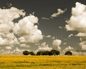 Nature Photography, Print, Spring, Trees, Clouds, Sky, Golden, Yellow, Nature, Photograph  - Proceeding Forth