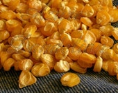 Heirloom Golden Bantam Corn