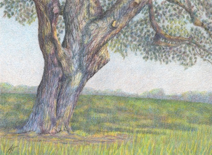 Original Wishing Tree Colored Pencil Painting