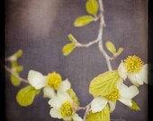 B1G1 FREE SALE - Sugar Plum Vines - 8x8 Fine Art Photography Print