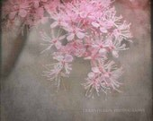 Brown & Pink Flower Photography, floral home decor photo