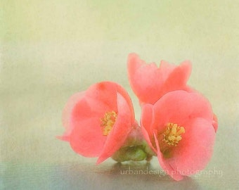 Coral Flower Blossoms Photography, floral wall art, modern spring print, home decor, minimal - 8x8