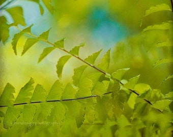 Dragontail Fern Nature Photography, woods, green blue wall art, home decor - 8x8