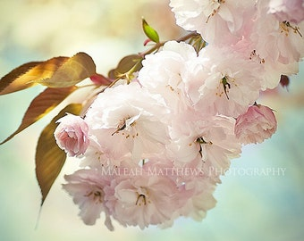 Pink Cherry Tree Flower Photography, pastel baby nursery print, home decor, floral photo