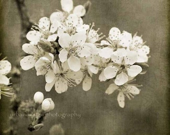 Apple Tree Photography, Vintage Flower Photography, Sepia and White Wall Art, Shabby Chic Decor, Brown Nursery Print