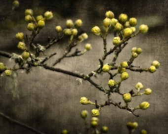 Out of Winter Black & Yellow Flower Photography - modern home decor