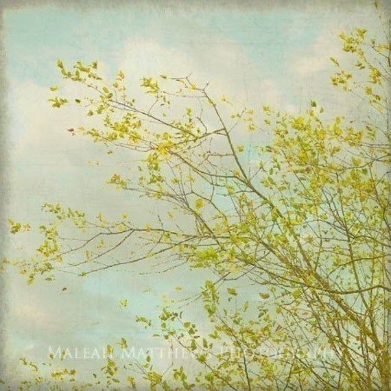 Poplar Tree Photograph, blue and green, nature photography, vintage, tree print, dreamy, wall art