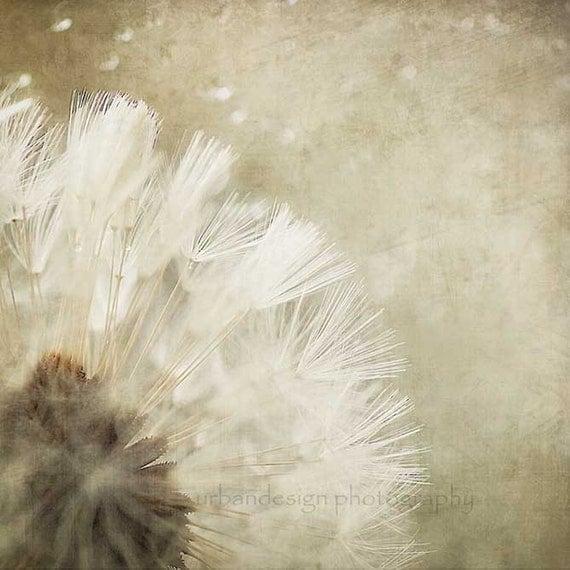 Dandelion Fine Art Photography - white and beige baby nursery print, home decor photo -