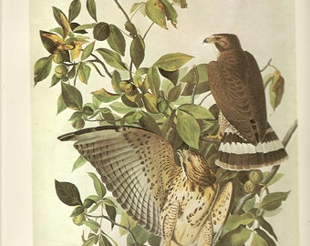 5 Old 1966 Water-Color Painting John James AUDUBON For Birds Of AMERICA Vol.II Book Plates
