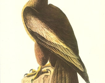 Old 1937 JOHN JAMES AUDUBON The Birds Of America Book Plate Bald Eagle (11)