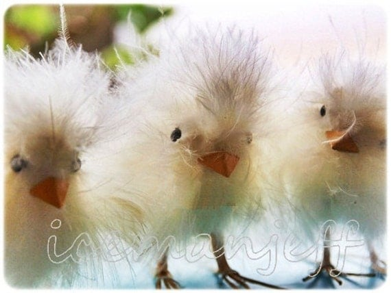 fuzzy easter chicks