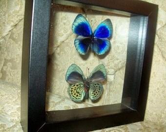 Blue Sapphire Flying Jewel