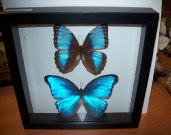 Two Pretty Morphos