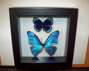 Blue Morpho and Blue Sapphire Beauty
