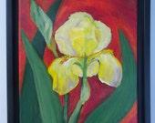Set of 4 framed Iris Paintings in acrylics