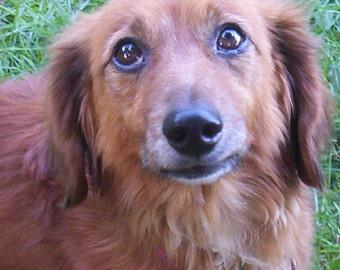 Free Skin Cream-Help Sponsor Buddy a Rescue Dog--Animal Rescue
