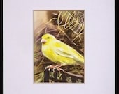ACEO mat - White - 5 x 7 inches  or smaller