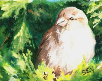 ACEO Original Painting - Sparrow