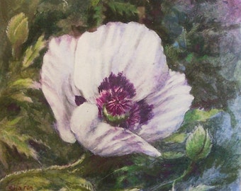 Original Painting Mixed Media  White Poppy Floral  Watercolor and Colored Pencil with Mat and Frame