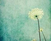 Queen Anne's Lace print / pastel blue rustic modern art / wildflower botanical art print / white flower minimal wall art  'Efflorescence'
