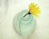 Dandelion photograph lemon yellow pale aqua still life photography art print  'Yellow Zen'