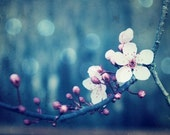 """Blue wall art - plum blossoms - fine art photography - flowering tree branch - floral wall art - square print  """"Plum and Blue"""""""