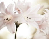 """Flower photography - soft pale pink lily - botanical print - delicate flowers - pale ivory white -  pink floral wall art  """"Pink Ladies"""""""