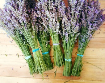 "Lavender french country rustic farmhouse photography purple green garden wall art print ""Lavender Bundles"""