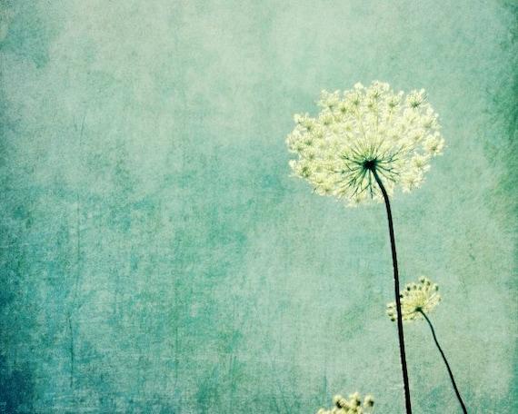 Queen Anne's Lace botanical art print pastel blue rustic modern wildflower white flower minimal wall art - Efflorescence