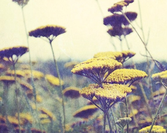 "Flower photography - mustard yellow decor - botanical art print - floral photography - sage plum wildflower photo  11x14 art ""Indian Summer"""