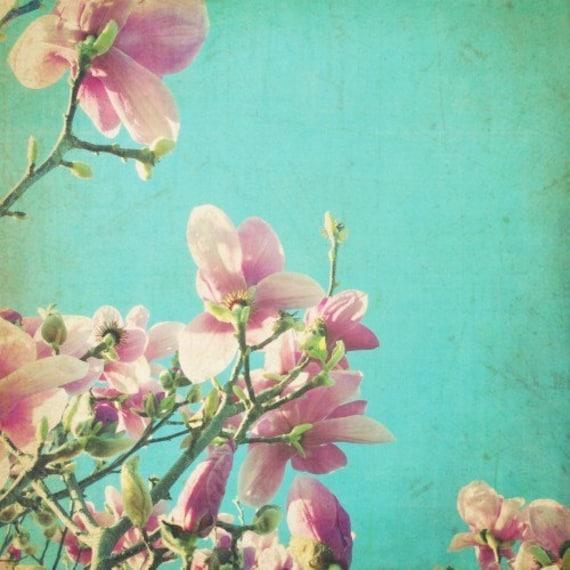 "Shabby chic photograph - pink magnolia flowers - teal blue sky - nursery room decor - fine art photography print 8x8 16x16 print ""Splendor"""